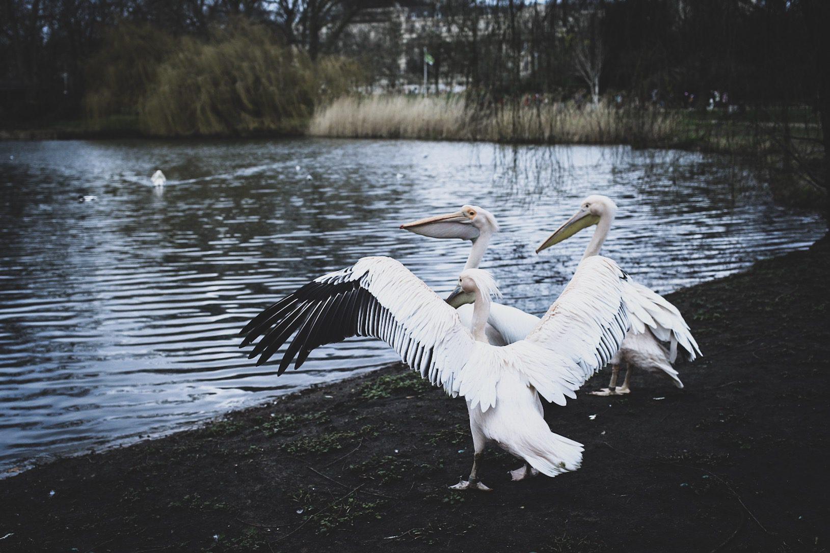Lovely life resa London Sant jaimses park