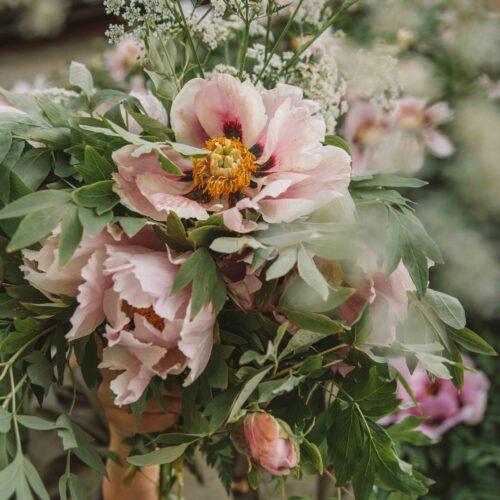Hög tid att plantera din buskpion