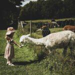 lovely life utflyktstips alpackagården