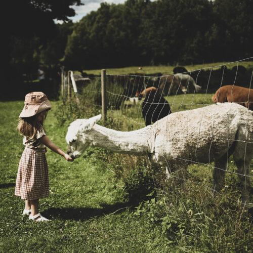Utflyktstips – Alpackagården
