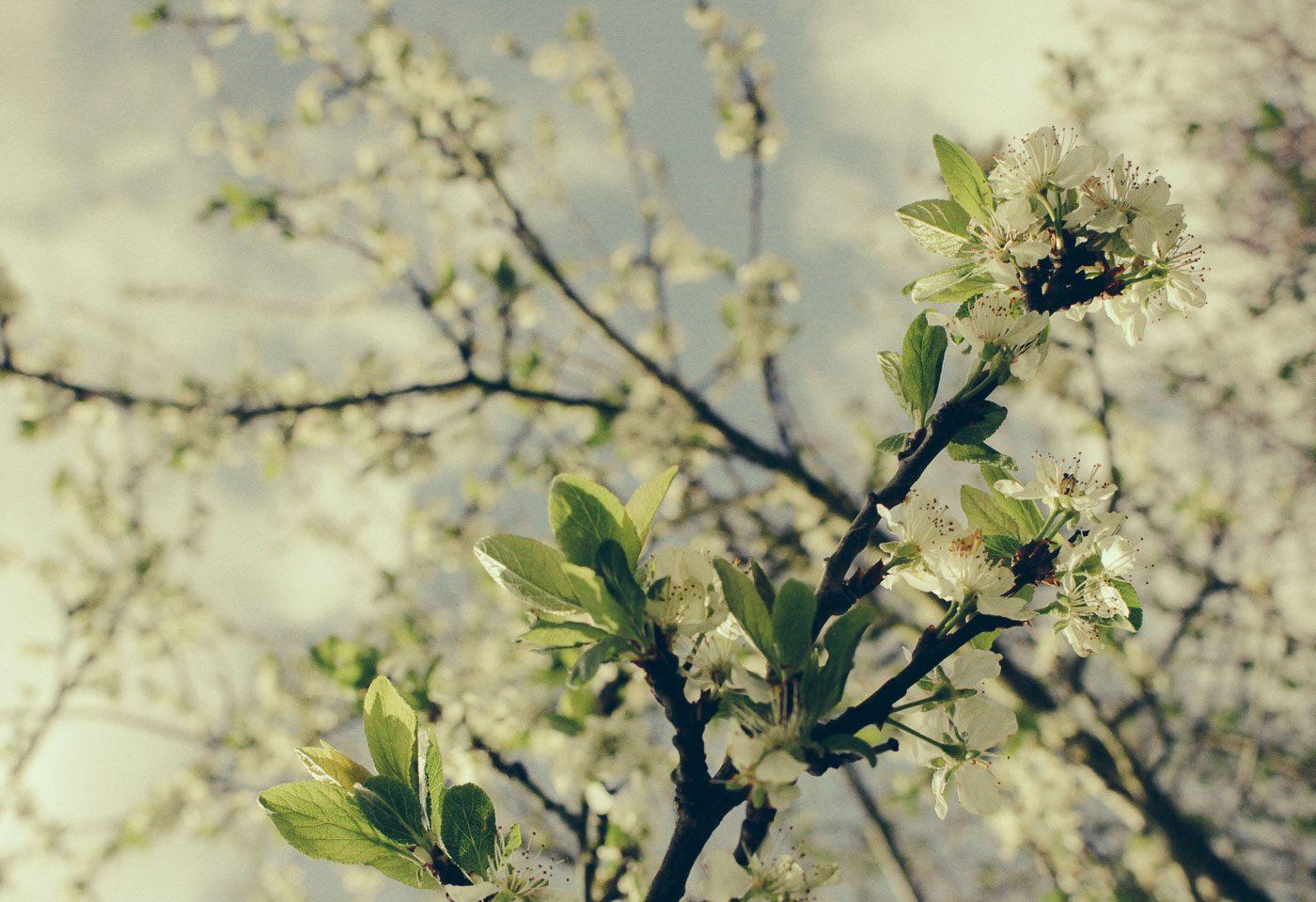 Skillad florals (11 av 14)