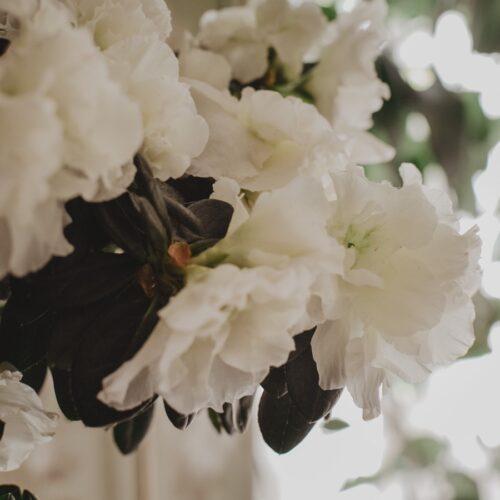 TIPS: Vilka blommor skall vi njuta av nu?