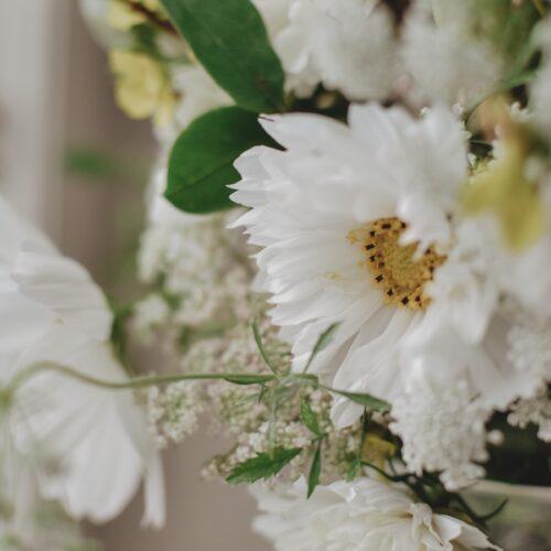 Rosenskära ~ en perfekt nybörjarblomma