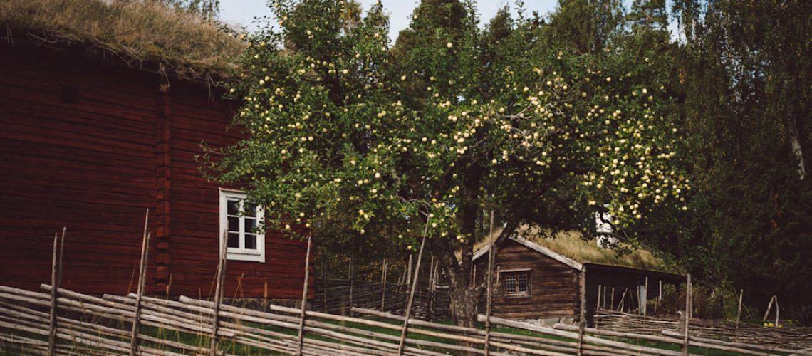 Babes_in_Boyland-Utflykt_barn_Vallby-2-2