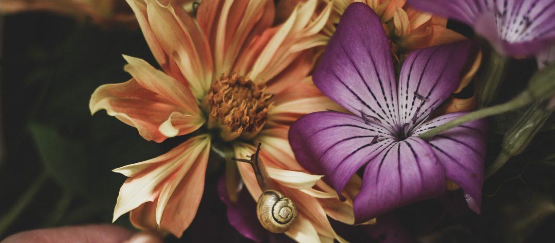 Lovely life blommor