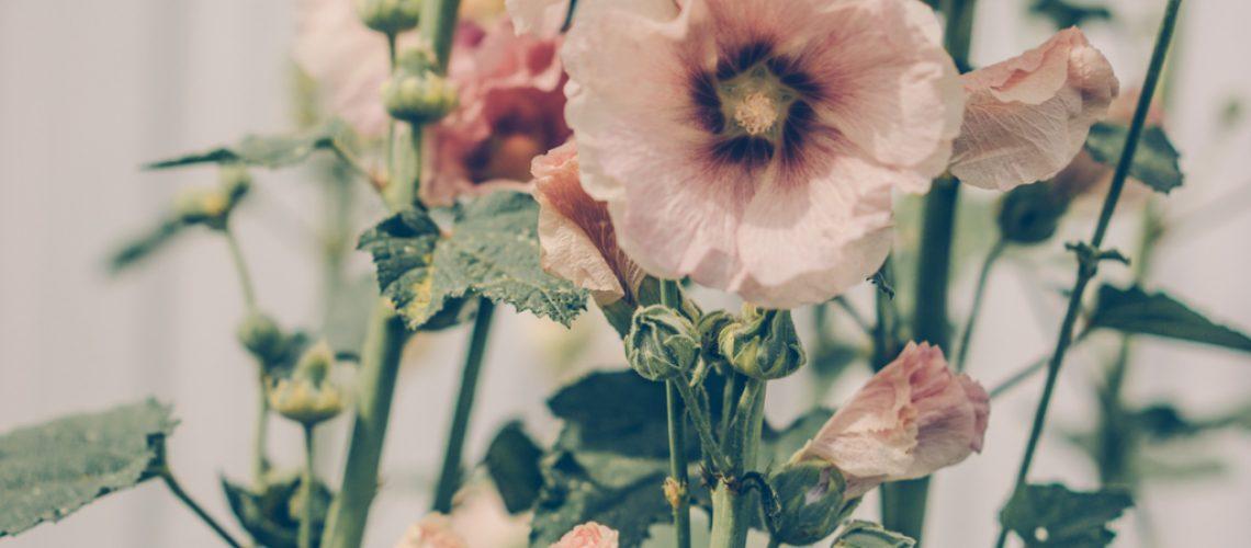 Lovely Life-08179