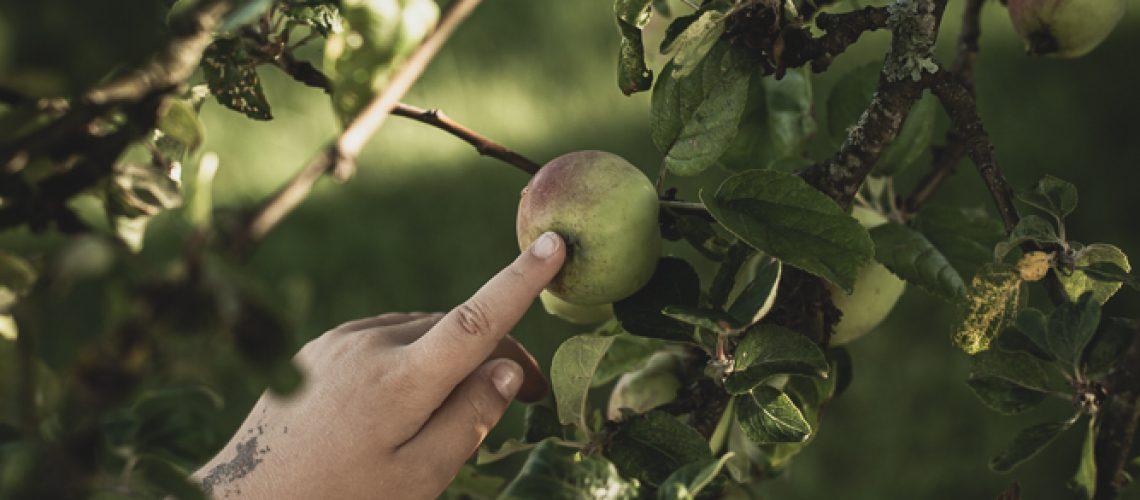 äppelspaning_LL-22