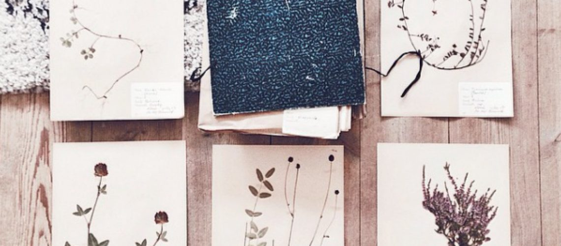 fridasfina_herbarium