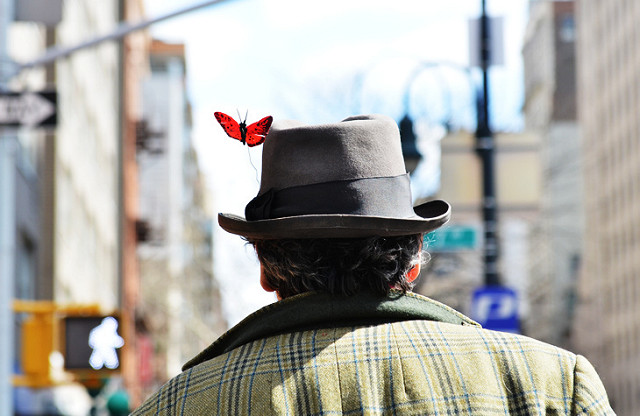 springbutterfly