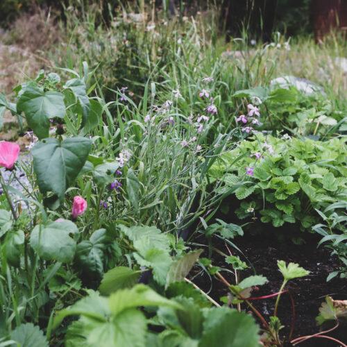 Trädgårdshäng i Augusti