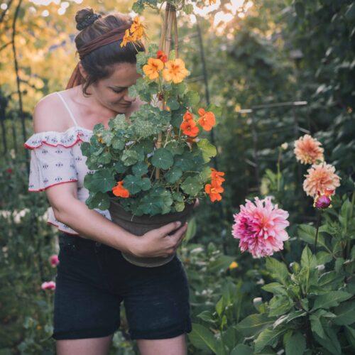 Älskade, hatade, ätbara blomma – krassen