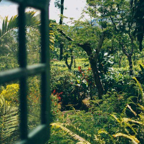 Resan till Sri Lanka, del 1