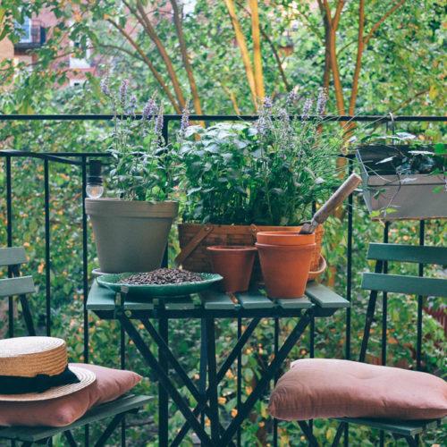 Skapa din egen kryddträdgård hemma!