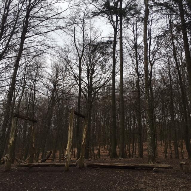 skog13165
